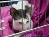 Expozitie pisici