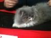 Expozitie pisici 2011