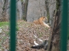 Gradina Zoologica Sibiu (11)