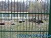 Gradina Zoologica Sibiu (15)