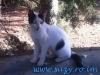 Pisici de Thassos