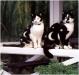 pisici-pictate-13