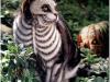 pisici-pictate-15