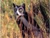 pisici-pictate-16