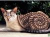 pisici-pictate-18