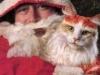 pisici-pictate-4