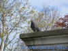 Regents Park (12)