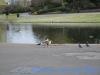 Regents Park (5)