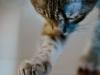 pisica-inel