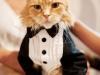 pisica-la-costum