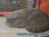 Expozitie internationala de pisici SofistiCat – Sala Palatului 8-9 martie 2014
