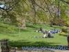 St James Park (8)