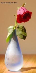 trandafir-in-vaza