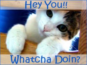 whatcha doin