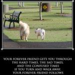 Un prieten adevarat