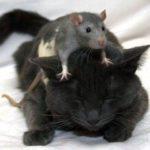 Sfaturi pentru posesorii de pisici