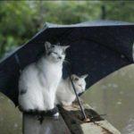 Masina pe post de umbrela