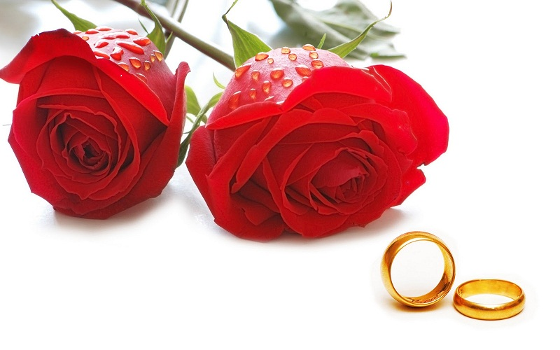 rose-day-red-roses-2013