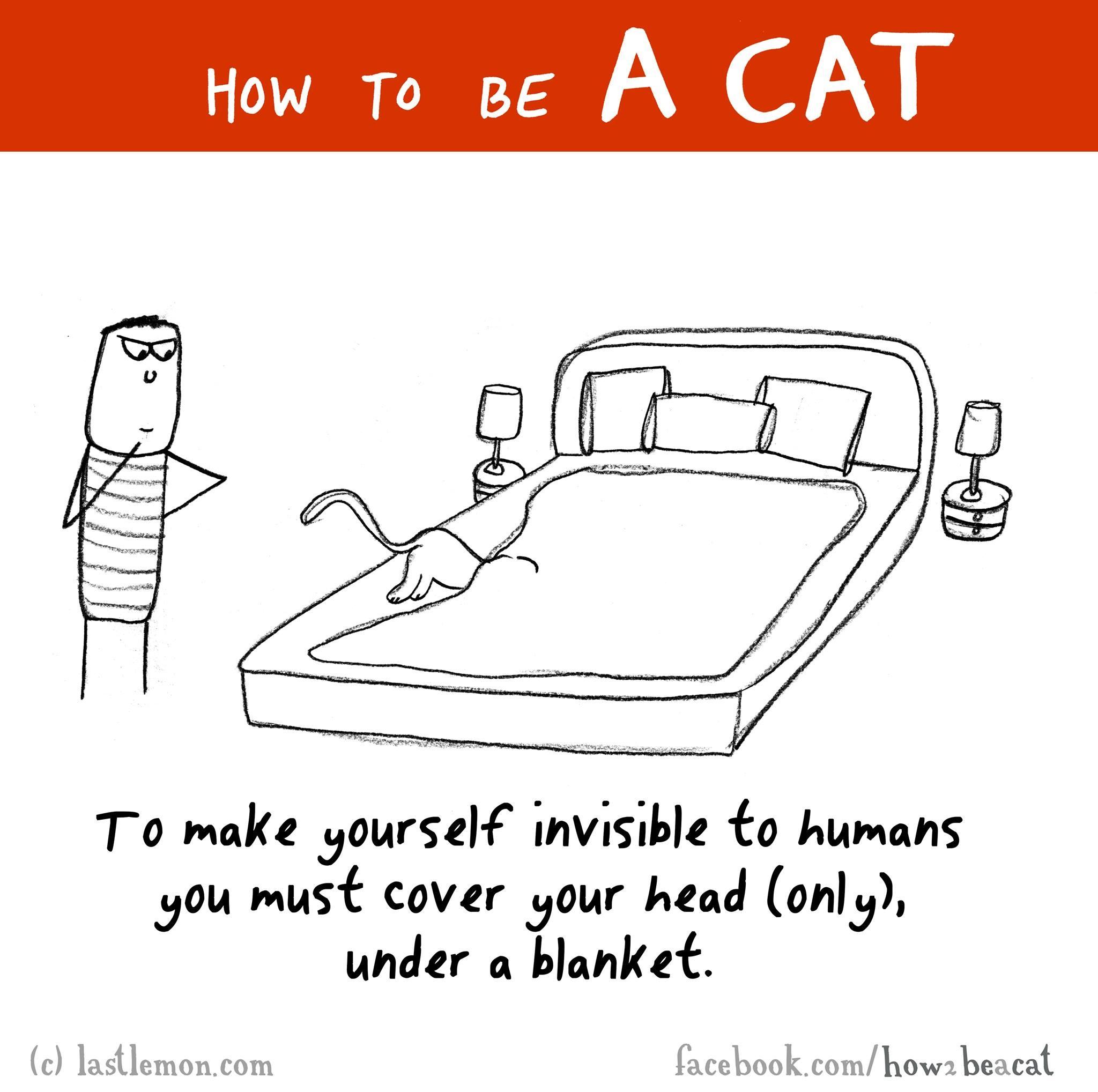 pisicile si patul