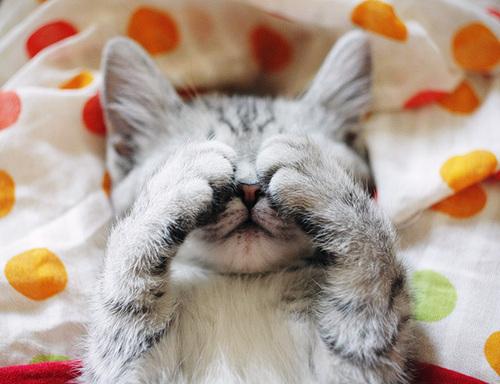 pisica cucu bau