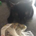 Pisicile si maslinele