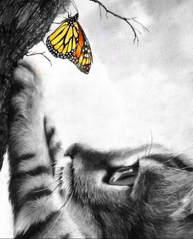 cat-and-butterfly