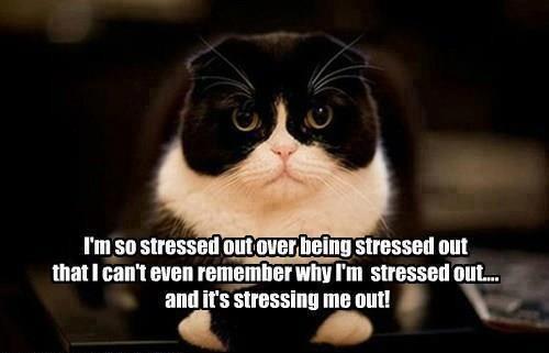 cat-stres