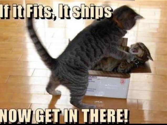 cats-fits