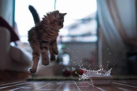 cat-water
