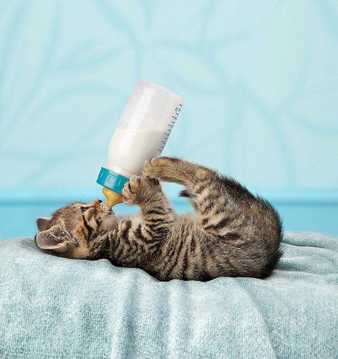 pisica-si-biberonul