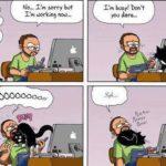 Esti un iubitor de pisici cand…