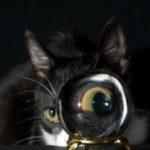 Despre pisici – stiati ca?