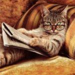Despre pisici: stiati ca..?